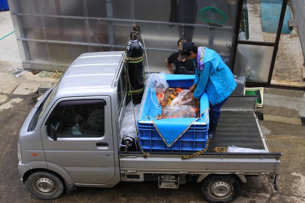 Artcane voyage au pays de la carpe ko for Elevage des carpes